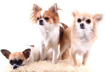 Papel de parede Dogs