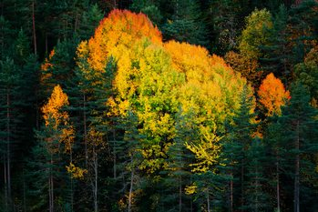 Papel de parede Fall colors trees