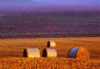 Papel de parede Farmer's Field