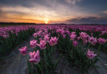 Papel de parede Field Of Tulips