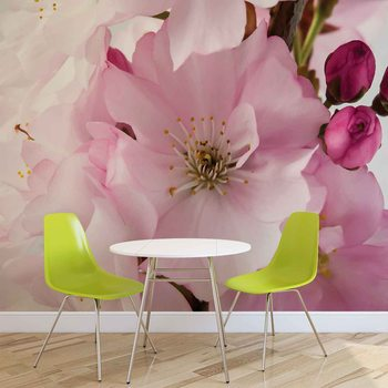 Papel de parede Flowers Blossoms Nature Pink