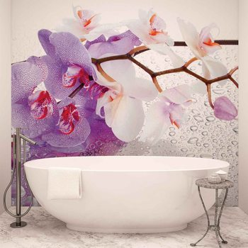 Papel de parede Flowers Orchids Nature Drops