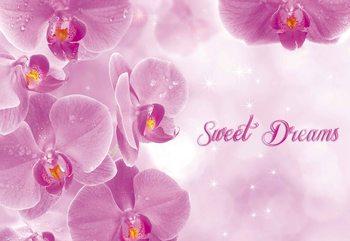 Papel de parede Flowers Orchids Pink