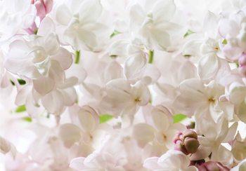 Papel de parede Flowers Spring Blossom