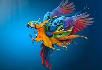 Papel de parede  Flying Colours