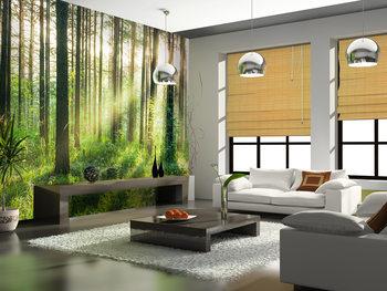 Papel de parede  Forest – Sunbeams