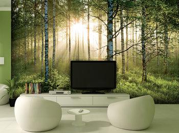 Papel de parede Forest - Sunbeams