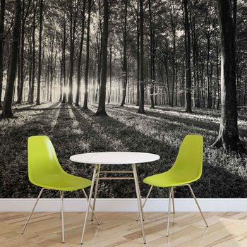 Papel de parede  Forest Trees Beam Light Nature