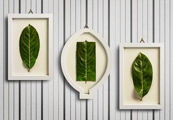 Papel de parede Framed Nature