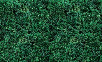Papel de parede Grass Texture
