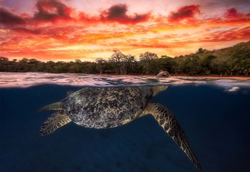 Papel de parede Green Turtle And Fire Sky