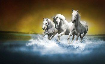 Papel de parede  Horses