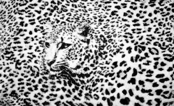 Papel de parede  Leopard