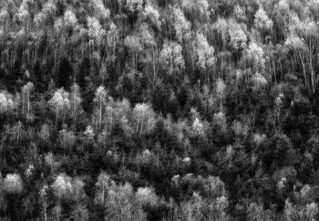 Papel de parede Nature