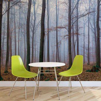 Papel de parede  Nature Wood Forest