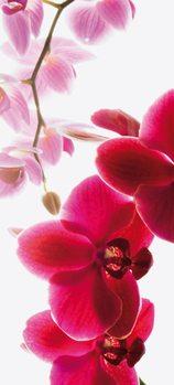 Papel de parede Orchid