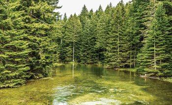 Papel de parede River Forest Nature