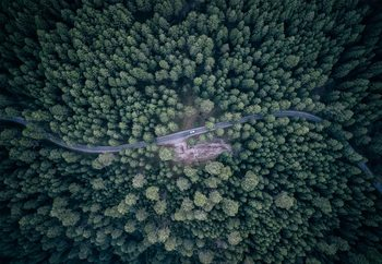 Papel de parede Road Through The Forest