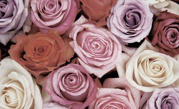 Papel de parede Roses Flowers Pink Purple Red