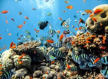 Papel de parede Sea Ocean Fish Corals