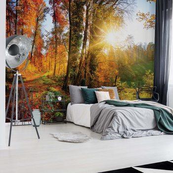 Papel de parede Sunrise In Autumn Forest