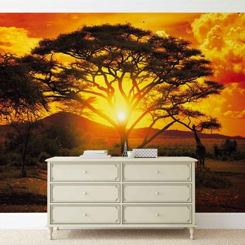 Papel de parede Sunset Africa Nature Tree