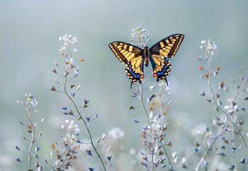 Papel de parede Swallowtail Beauty