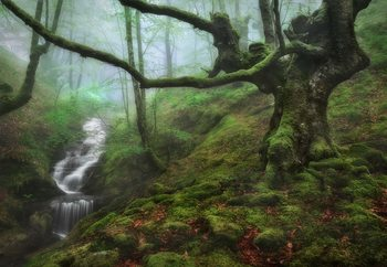 Papel de parede The Enchanted Forest