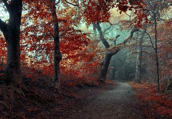 Papel de parede The Red Forest