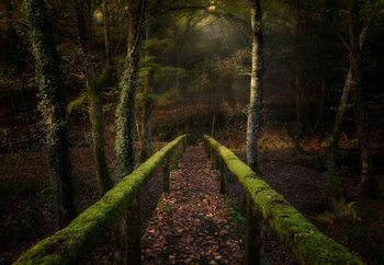 Papel de parede The Way To The Forest