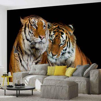 Papel de parede  Tigers