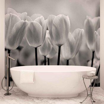 Papel de parede  Tulip Flowers