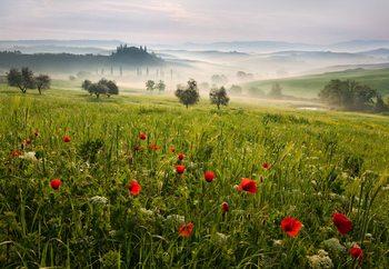 Papel de parede Tuscan Spring