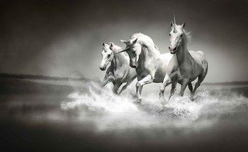 Papel de parede  Unicorns Horses Black White