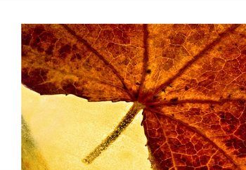 Papel de parede When Autumn Slides Into Winter