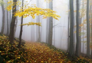 Papel de parede Yellow Leaves In The Forest