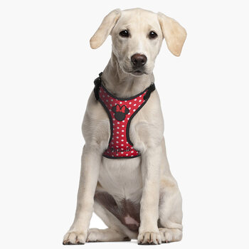 Dog harness Minnie Mouse