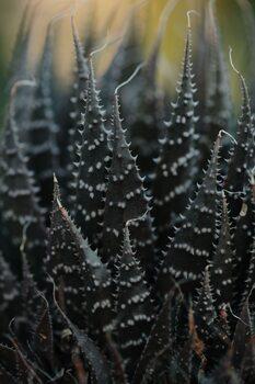 Eksklusiiviset taidevalokuvat Cactus leaves