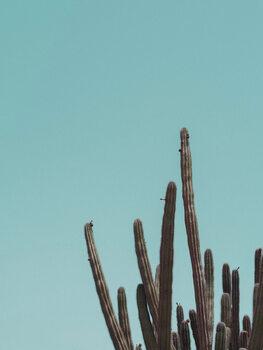 Kuva Cactuscorner green