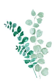 Kuva Eucalyptus two ways