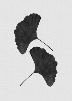 Kuva Ginkgo Leaf Black & White II