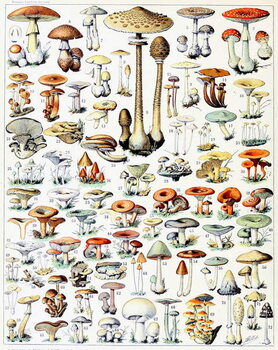 Illustration of Mushrooms  c.1923 Taidejuliste