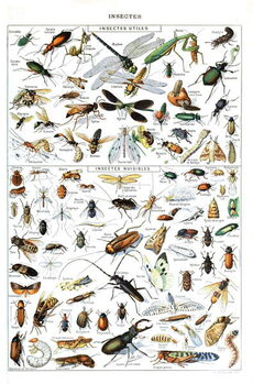 Illustration of  useful Insects and insect pests c.1923 Taidejuliste