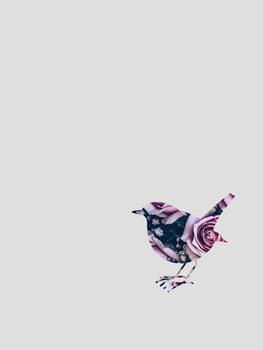 Kuva robin flower
