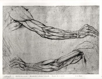 Study of Arms Taidejuliste