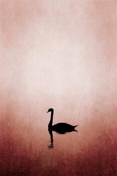 Kuva Swan Lake