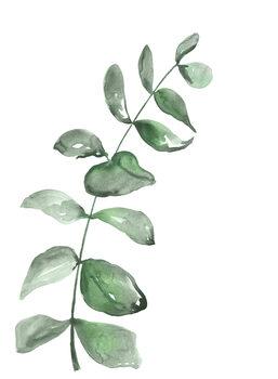 Kuva Watercolor greenery branch
