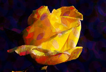 Yellow Rose Taidejuliste
