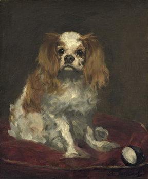 A King Charles Spaniel, c.1866 Taidejuliste