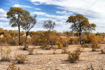 Eksklusiiviset taidevalokuvat African Savannah Landscape